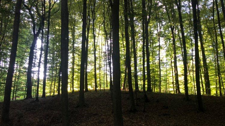 O šumi Kozjači